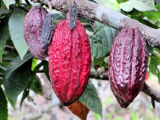 Chocolaterie Pâtisserie Collet (JRVE)
