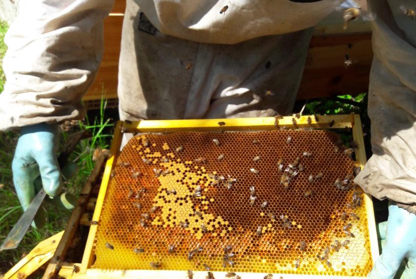 La ruche de Mary apiculteur[:en]20180608_104843[:]