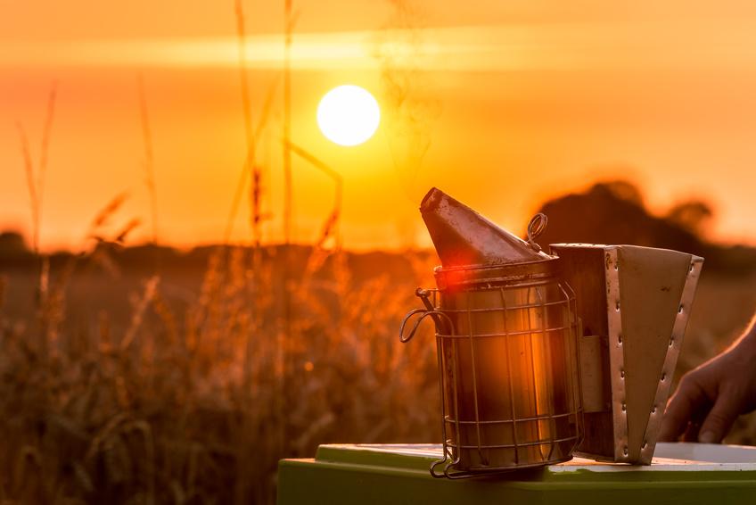 Das Arbeitsgerät Smoker eines Imkers im Licht des Sonnenuntergangs - Gegenlicht