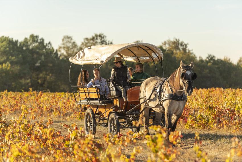 Domaine Eric Sage – vigneron